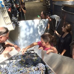 The whole crew sorting grapes